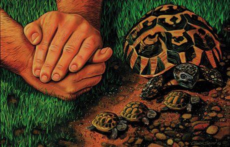 Fingershell by Chuck Baird